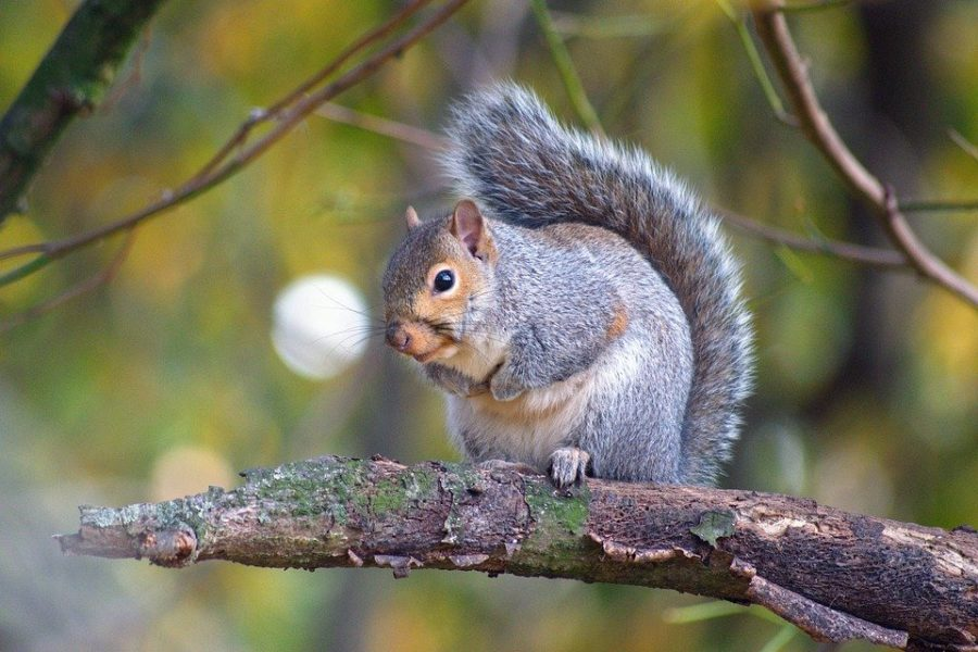Robert the Squirrel serves as an alias for students running the Nutty Anselm page.